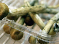 Trei copii in stare grava la spital dupa ce au mancat ciuperci otravitoare