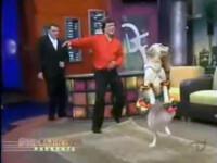 SUPER! El este cainele care cu siguranta danseaza salsa mai bine ca tine!