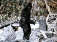 """""""Monstrul legendar exista"""". Ce au gasit cercetatorii in padurile din Siberia"""