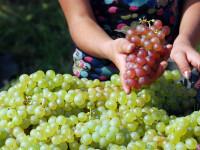 Romania, te iubesc: Cati struguri mai sunt in vinul pe care-l bem.Lista bauturilor periculoase.VIDEO