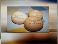 Primarul din Navodari, care si-a facut campanie electorala pe oua, arestat pentru dare de mita