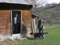 Un contrabandist de tigari din Maramures a fost prins cu ajutorul unui caine special dresat