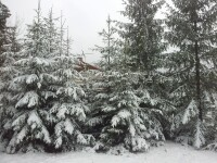 Iarna a ajuns la Cluj. La Baisoara, stratul de zapada atinge 10 centimetri
