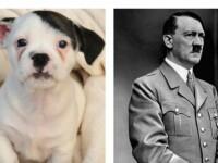 Cum arata cainele ajuns vedeta pe Internet, dupa ce multi au spus ca seamana cu Hitler