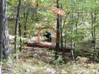 A fotografiat un urs urias cu cateva secunde inainte de a fi atacat si ucis de fiara. Scena cumplita povestita de martori