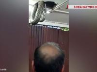 Incident bizar intr-un restaurant din Hong Kong, unde clientii s-au trezit cu un sarpe de sase metri iesind din tavan. VIDEO