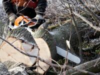 Un barbat din Baia Mare si-a ucis din greseala fiul in timp ce taia lemne in padure. Cum s-a petrecut tragedia