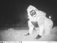 Au montat camere de filmate intr-un parc national, crezand ca vor surprinde pume. Imaginile inregistrate au fost neasteptate