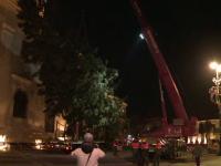 Bradul de Crăciun a fost instalat în Sibiu. Are 80 de ani și 20 de metri înălțime