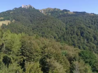 Schweighofer vinde cele peste 14.000 de hectare de păduri din România