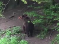 Urs împuşcat