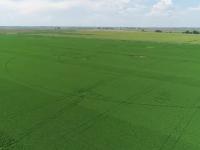 Cum am ajuns să dăm materie primă şi să importăm hrană procesată de milioane de euro