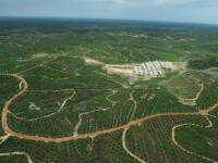 Oficial român ONU: Ne-am putea documenta propria extincție