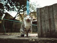 A murit după ce l-a mușcat o pisică, în timpul vacanței în Maroc