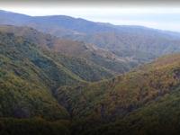 VIDEO reportaj BBC: Pădurea rară din România care dispare