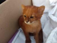O tânără a adoptat un animal, crezând că este un pui de pisică. Ce era de fapt creatura