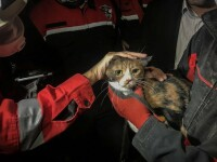 VIDEO. O pisică a fost salvată de un câine dintre ruinele unei clădiri prăbușite în Izmir