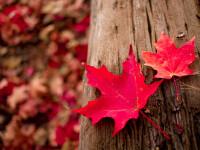 Vremea azi, 5 noiembrie. Se răcoreşte şi o să plouă în vestul şi în nordul ţării