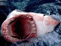 La 60 de ani s-a luptat cu un rechin si a supravietuit!
