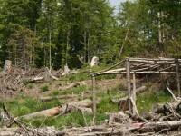Un padurar a impuscat doi hoti de lemne prinsi in fapt. Acum risca puscaria