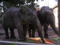Un elefant speriat a facut prapad la un templu din India!