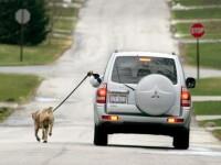 Uite cum isi plimba cainele un britanic lenes!