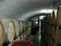 Incalzirea globala schimba harta vinurilor