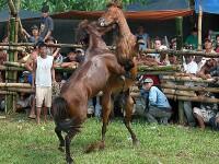 Sarituri peste obstacole, cascadorii si plimbari cu caii!