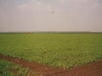 Oamenii de afaceri din Emiratele Arabe vor sa faca agricultura in Romania