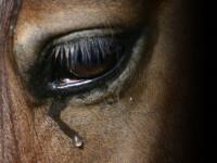In sfarsit au actionat! Autoritatile sustin un adapost pentru caii parasiti
