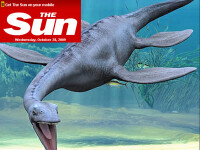 Monstru marin, descoperit in Marea Britanie!