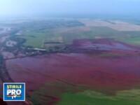 Borbely: Substantele toxice nu vor afecta flora si fauna din Dunare