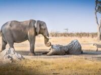 Turist ucis de un elefant pe o insula din Thailanda. Fiica barbatului, ranita in incident