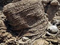 Doua mumii vechi de peste un mileniu au fost descoperite intacte intr-un sit preincas din Peru