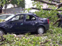 Din cauza vantului, un plop urias a distrus doua masini in Galati. Soferii vor sa dea primaria in judecata