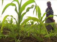Cum se face agricultura la limita supravietuirii in Romania. Peste 90% dintre proprietati sunt in aceasta situatie