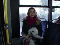 Orasul din Romania unde cainii pot calatori cu autobuzul, daca au bilet. Regulile pe care trebuie sa le respecte stapanii