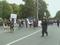 Protest in Bucuresti si in alte capitale europene fata de cruzimea impotriva animalelor. Ce pedepse cer organizatiile