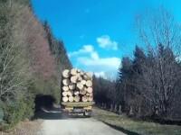 Misiune imposibila: oprirea unui transport de lemn taiat ilegal. Ultimele paduri virgine ale Europei, in pericol sa dispara