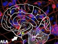 VIDEO Ce se intampla in creier cu cateva momente inainte sa mori?
