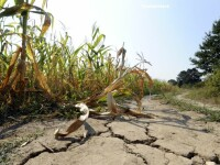 Romania, prinsa nepregatita pentru a face fata schimbarilor climatice. Ce solutii au gasit agricultorii in lupta cu seceta