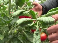 Romanii care au muncit in strainatate sunt fermieri de succes la noi. Secretele pe care le-au adus cu ei de peste hotare