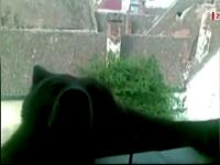 Lectia brasovenilor pentru sibieni in cazul ursului ucis. Cum au capturat o ursoaica de 300 de kg, urcata pe o casa