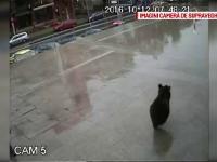 Seful Politiei Sibiu a demisionat dupa scandalul impuscarii ursului.
