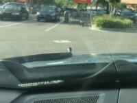 Surpriza de care a avut parte un sofer din Florida. Un sarpe de 2 metri a aparut pe parbriz in timp ce barbatul era in trafic