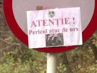 Ursul care sambata a ranit un turist american ar fi atacat din nou. Fiara ar fi omorat un magar de la o stana
