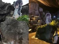 Un pinguin care s-a îndrăgostit de un poster cu o fată a murit lângă imaginea sa favorită