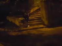 Un urs s-a plimbat netulburat printre blocurile din Braşov. În zonă vin şi mistreţi