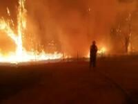 Aproape 40 de morți în urma incendiilor din Portugalia și Spania. Rajoy: Nu a fost un incident