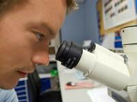 Studiu: Întărirea sistemului imunitar ar putea fi factorul-cheie în prevenţia cancerului
